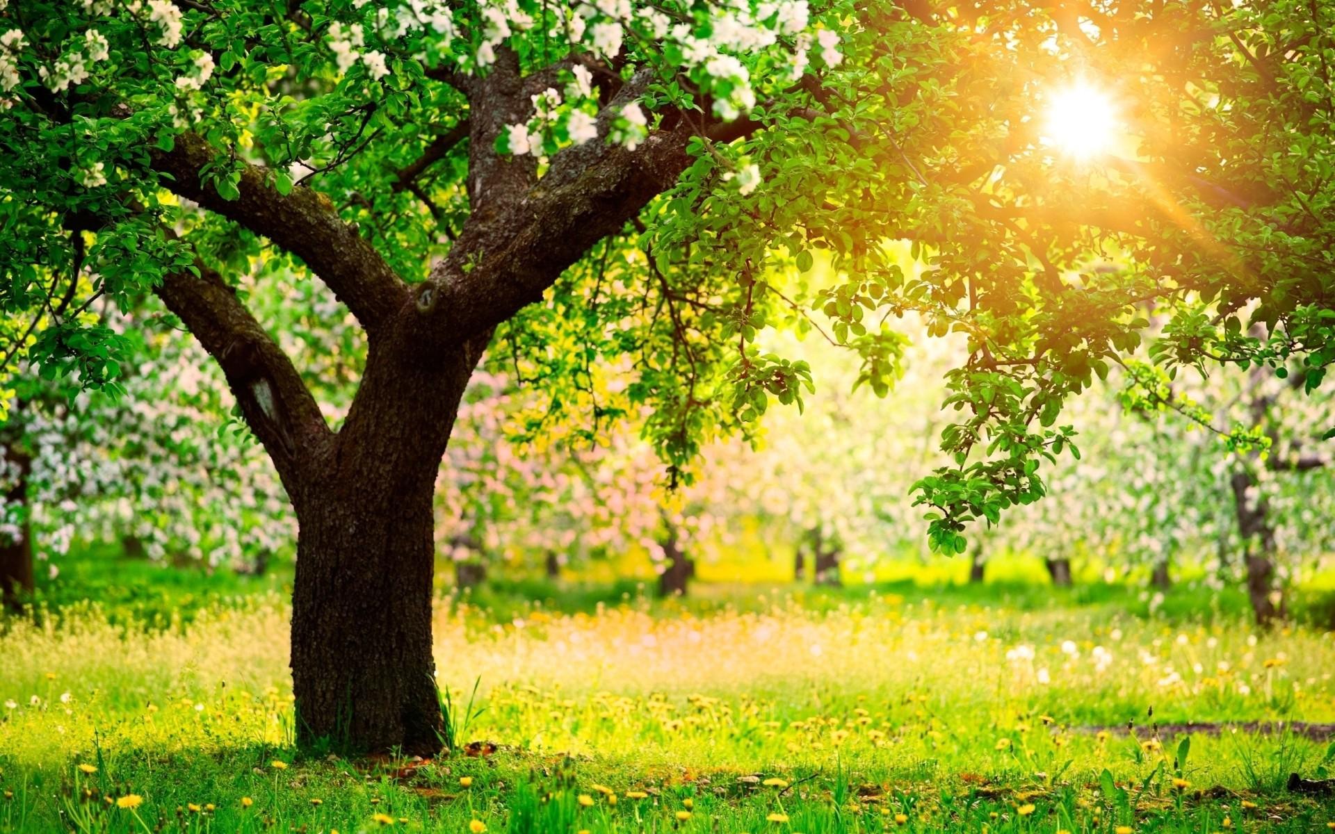 Site internet - arbre automne